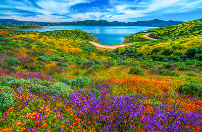 California Spring Wildflower Superbloom Symphony #6: Diamond Valley Lake Wildflower Trail Superbloom!   California Poppy Wild Flower Super Bloom Fine Art Landscape Nature Photography!  Elliot McGucken Fine Art Prints & Luxury Wall Art