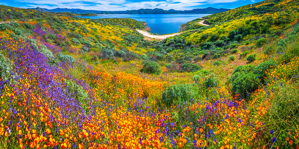 California Spring Wildflower Superbloom Symphony #19: Diamond Valley Lake Wildflower Trail Superbloom!   California Poppy Wild Flower Super Bloom Fine Art Landscape Nature Photography!  Elliot McGucken Fine Art Prints & Luxury Wall Art