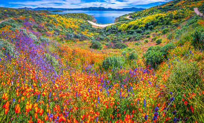 California Spring Wildflower Superbloom Symphony #13: Diamond Valley Lake Wildflower Trail Superbloom!   California Poppy Wild Flower Super Bloom Fine Art Landscape Nature Photography!  Elliot McGucken Fine Art Prints & Luxury Wall Art
