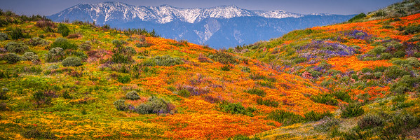 Diamond Valley Lake Wildflower Trail Superbloom! California Poppy Wild Flower Super Bloom Fine Art Landscape Nature Photography!  Elliot McGucken Fine Art Prints & Luxury Wall Art