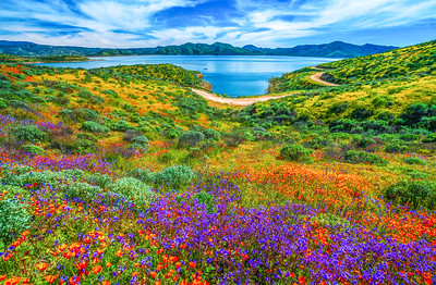 California Spring Wildflower Superbloom Symphony #5: Diamond Valley Lake Wildflower Trail Superbloom!   California Poppy Wild Flower Super Bloom Fine Art Landscape Nature Photography!  Elliot McGucken Fine Art Prints & Luxury Wall Art