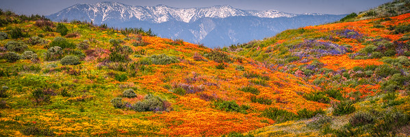 California Spring Wildflower Superbloom Symphony #3: Diamond Valley Lake Wildflower Trail Superbloom!   California Poppy Wild Flower Super Bloom Fine Art Landscape Nature Photography!  Elliot McGucken Fine Art Prints & Luxury Wall Art