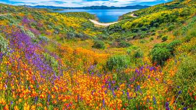 California Spring Wildflower Superbloom Symphony #20: Diamond Valley Lake Wildflower Trail Superbloom!   California Poppy Wild Flower Super Bloom Fine Art Landscape Nature Photography!  Elliot McGucken Fine Art Prints & Luxury Wall Art
