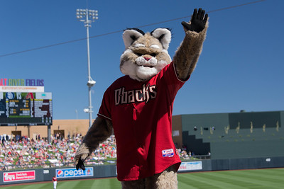 Baxter at Salt River Fields.jpg