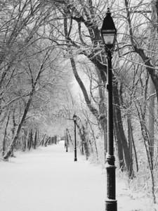 Illinois Prairie Path Winter