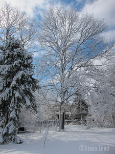 Backyard trees follow.