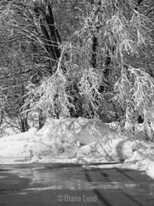 This pile is as tall as I am and is piled in the street since there is nowhere left to put it. How much snow is left after five days of melting followed by a five inch snow. Picture 696copy2.jpg