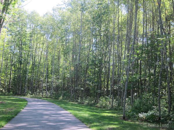 Manitowish bike trail