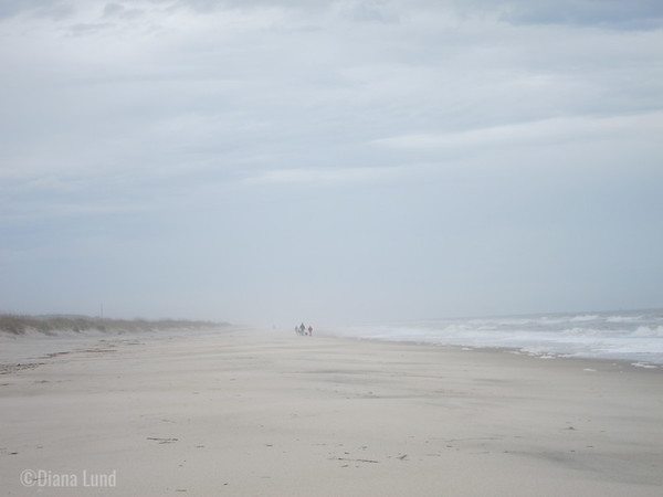 Pictures that follow are either Huntington Beach State Park or Myrtle Beach State Park.