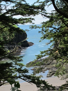 path to one of the lighthouses on cape disappointment IMG_4766.JPG