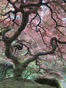 Japanese Garden in Portland IMG_4396.JPG