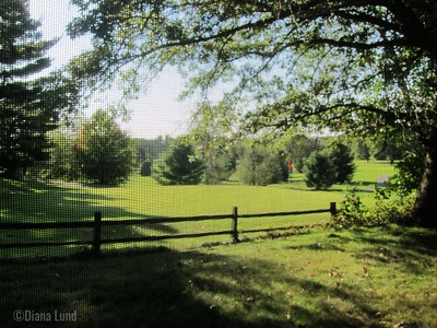 view from my screened porch, IMG_3576 (2).JPG