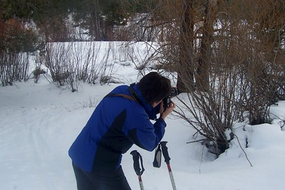 2010, Seeking Wildlife Photos near Lake Tahoe