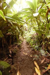 2004-11-30 Ka-ulu-Paoa Heiau, Kauai