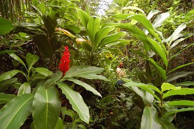 2004.11.30 Kauai Hula School