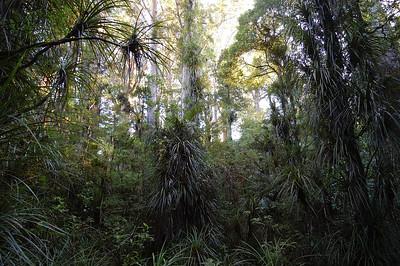 2004.03.04 Waipoua Forest, New Zealand