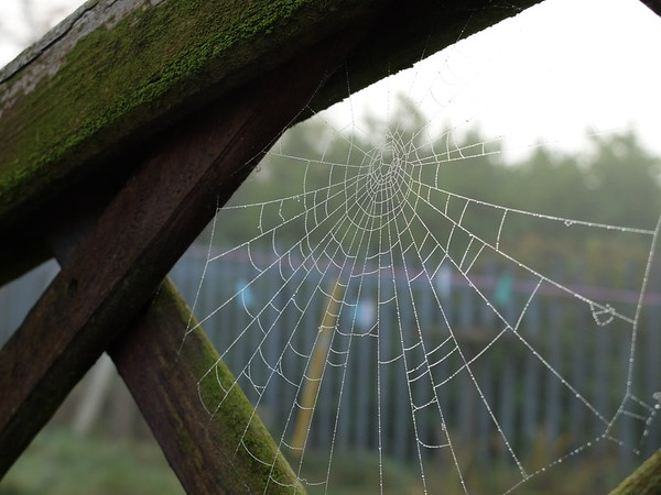 spider web...obviously