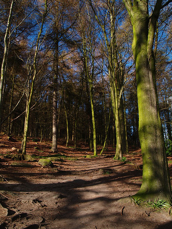 4th April 2009. St Ives Wood - Bingley  No processing on this..honestly, these are the real colours. It was a bit overcast and rained briefly but the sun kept peeking through the clouds and when it did, the light gace some lovely colours and shadows