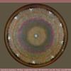 Diatom - Aulacodiscus margaritaceus