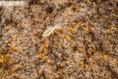 Termite Scale Farm