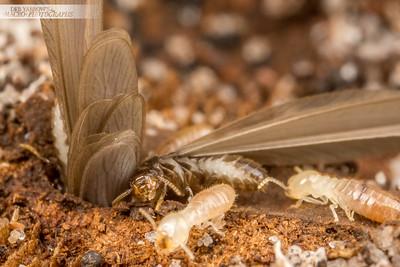 Termite Exodus