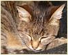 Mijn kat Lotje