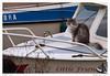Kat aan boord, Zwartewaal