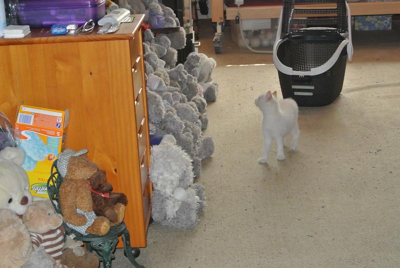 Bezoek kittens - 10 weken oud...