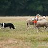 Continental Sheepdog-1992