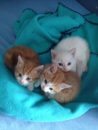 Yéé... 2 Jonge kittens 2015 (Blankenberge)