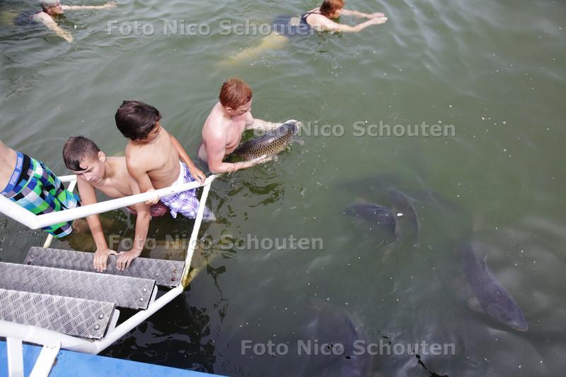 Zwemmen met karpers in natuurzwembad de Rijwijkse Put - RIJSWIJK 16 JULI 2013 - FOTO NICO SCHOUTEN