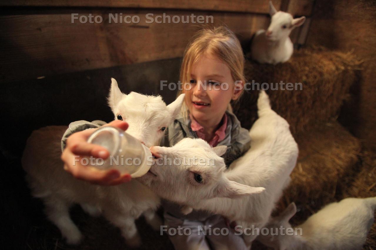 Jonge geitjes bij 't Geertje - Lorena uit Bergschenhoek kan er geen genoeg van krijgen om de jonge geitjes melk te geven - ZOETERWOUDE 23 MAART 2011 - FOTO NICO SCHOUTEN