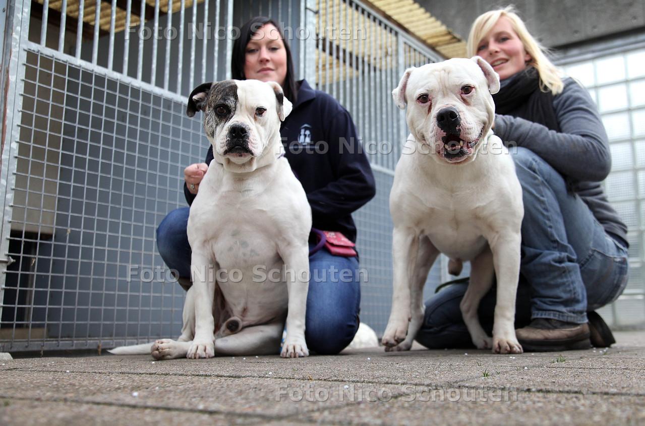 Asielhonden Diesel en Gypsy (met verzorgers Natasja (l) en Tessa), de broers kunnen niet zonder elkaar en zijn daarom lastig te plaatsen, het zijn de langst zittende dieren van het asiel - DEN HAAG 15 OKTOBER 2012 - FOTO NICO SCHOUTEN