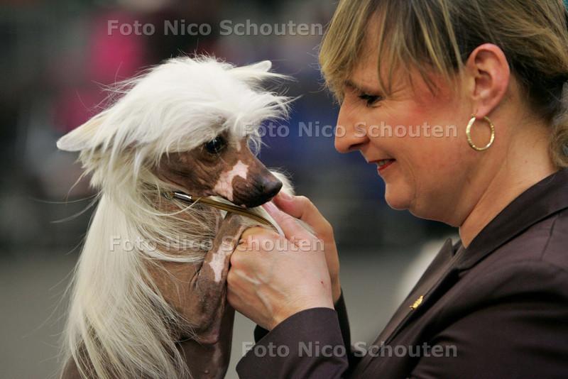 Enorme internationale hondenshow in Veilinghal. Op zaterdag 7 november en zondag 8 november zal de veilinghal van de Flora Holland te Bleiswijk geheel in het teken staan van onze 12e internationale hondententoonstelling 2009. In 21 ringen worden er in de voorrondes bepaald welke hond het ras als beste vertegenwoordigt. Hier het ras van de Chinese Naakthond - BLEISWIJK 7 NOVEMBER 2009 - FOTO NICO SCHOUTEN