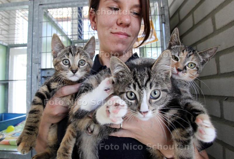 Heel veel kittens in dierenassiel aan de Lozerlaan - Verzorgster Michelle met vlnr Romy, Dany en Minet -  DEN HAAG 30 JUNI 2011 - FOTO NICO SCHOUTEN