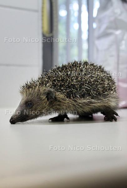 Egelopvang - ZOETERMEER 18 SEPTEMBER 2012 - FOTO NICO SCHOUTEN
