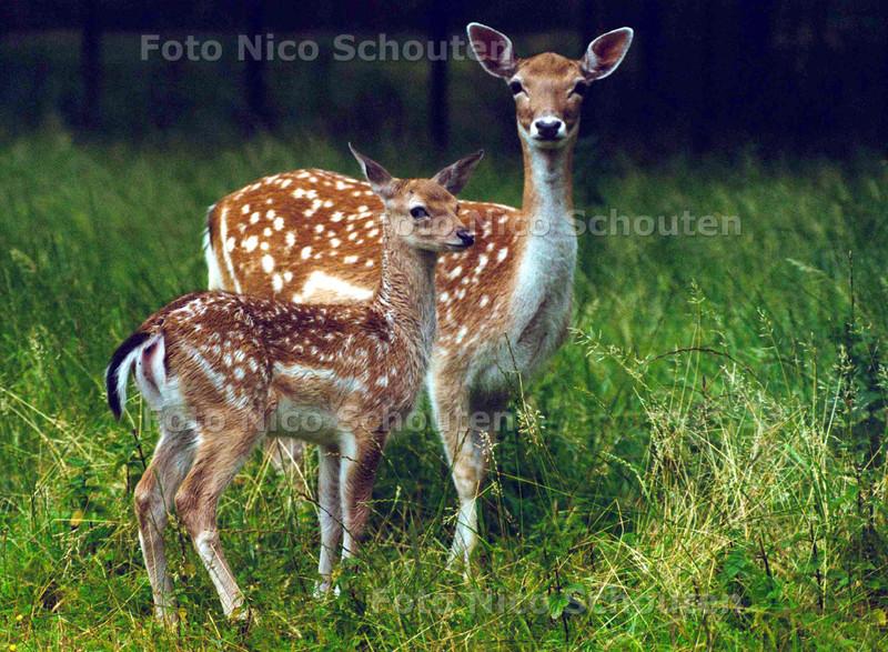 BABY HERTJE (VIER WEKEN OUD) IN HET ZUIDERPARK; DEN HAAG 13 JULI 2002; FOTO: NICO SCHOUTEN