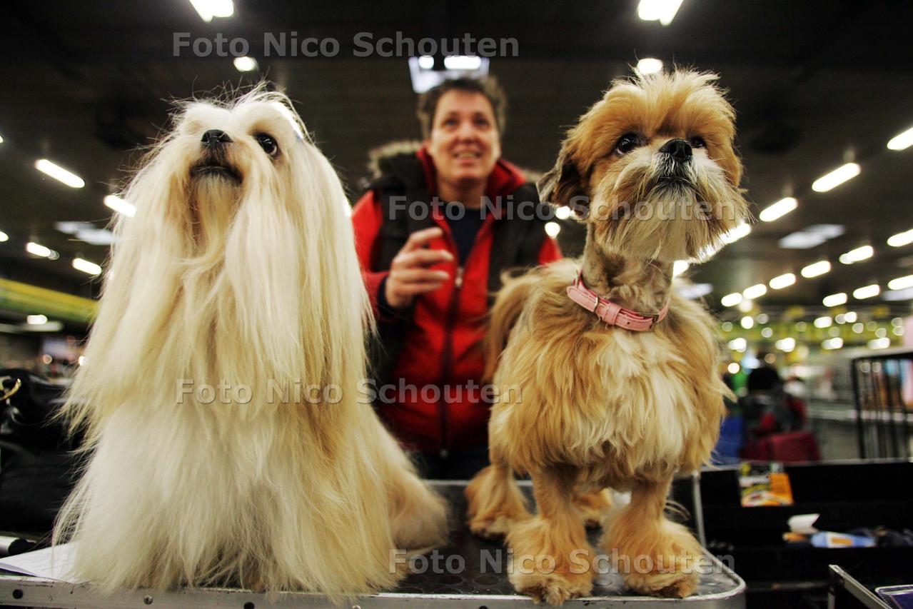 Enorme internationale hondenshow in Veilinghal. Op zaterdag 7 november en zondag 8 november zal de veilinghal van de Flora Holland te Bleiswijk geheel in het teken staan van onze 12e internationale hondententoonstelling 2009. In 21 ringen worden er in de voorrondes bepaald welke hond het ras als beste vertegenwoordigt. Twee Lhasa-Apso hondjes wachten ongeduldig op hun performance - BLEISWIJK 7 NOVEMBER 2009 - FOTO NICO SCHOUTEN