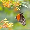 Vlinders, bij Vlinders aan de Vliet