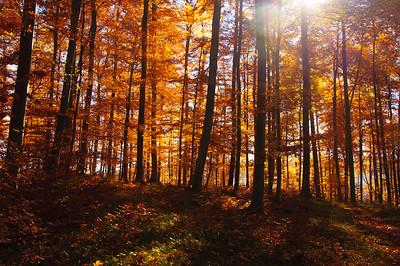 Herbst am Farrenberg
