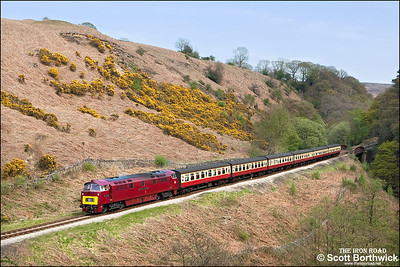D1015 'Western Champion' rolls downgrade at Thomason Foss with 2G08 1300 Pickering-Grosmont on 09/05/2008.