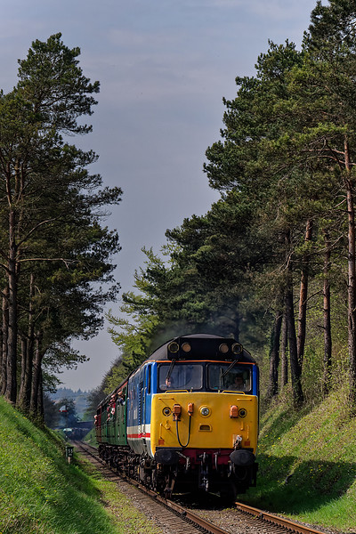 50027 passing through the pine trees, with the 10:10 Alresford - Alton, on 21st April 2018.