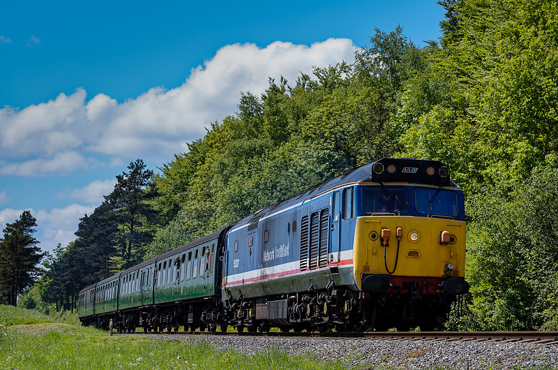 50027 exits the pine trees, with the 12:10 Alresford - Alton, on 25th May 2013.