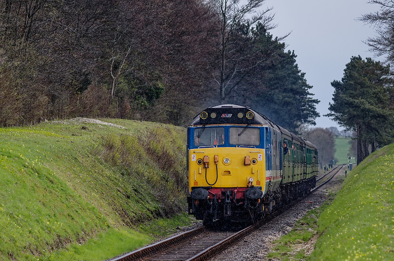 50027 passes through the pine trees, with the 12:50 Alton - Alresford, <br /> during the Diesel Gala on 27th April 2013.