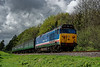 50027 exits the pine trees, with the 12:10 Alresford - Alton, on 26th April 2014.