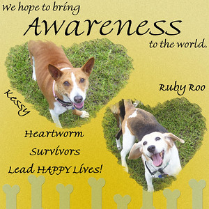 Heartworm Awareness