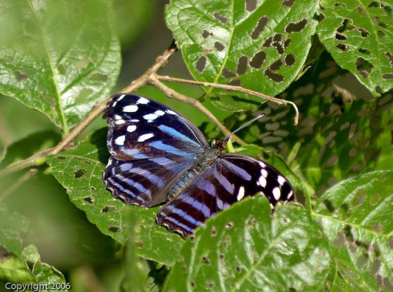 BlueWingDC41