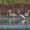 Heron Bookends