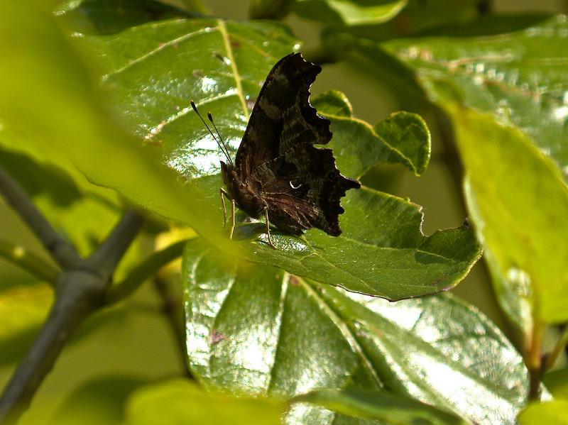 E. Comma, PhotoScope 85T*FL