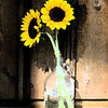 Sun Flowers #452 Digital Art Photography